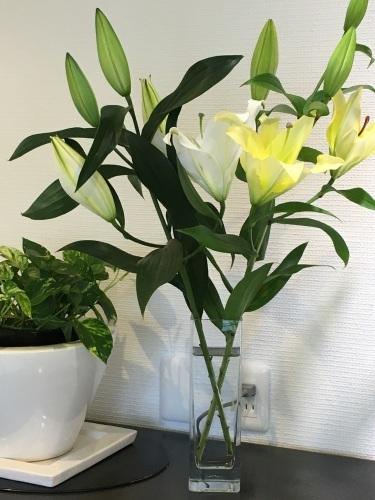 お花を買いに行きました。_f0347891_20431555.jpeg