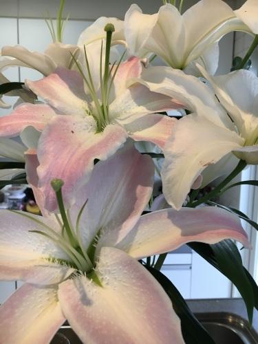 お花を買いに行きました。_f0347891_20434125.jpeg