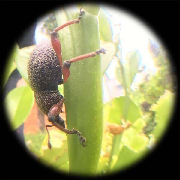 虫の目レンズ_d0321092_22250218.jpg