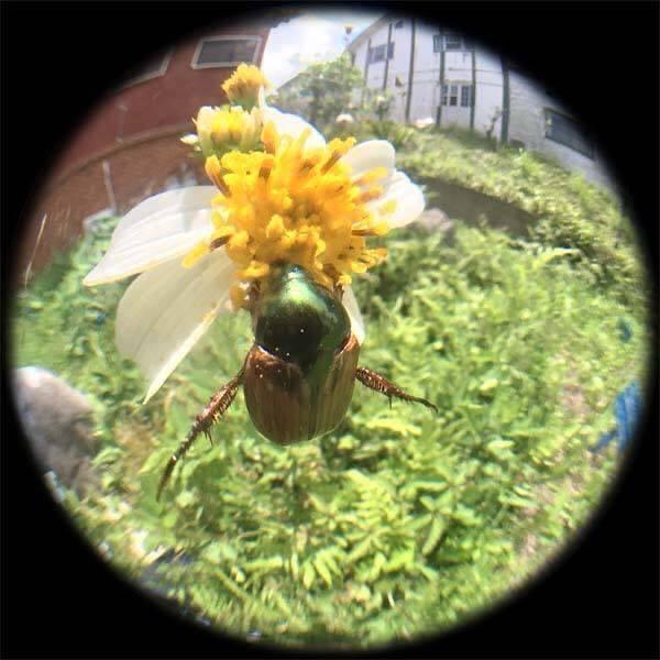 虫の目レンズ_d0321092_22250945.jpg