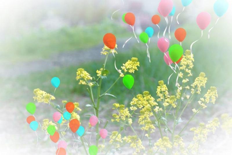 花・いろいろ_d0162994_07293256.jpg