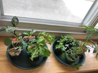 毎年恒例 野菜の苗植え_b0159098_17223803.jpg