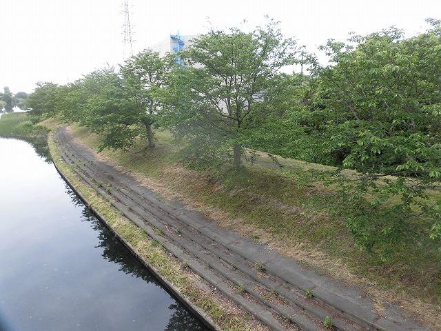 いや~結構歩いた12,000歩 そうだ!沼川プロジェクトの「滝川コース」の朝散歩_f0141310_07462163.jpg