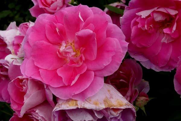植物園再開 やっとバラに会えた_e0048413_23180054.jpg