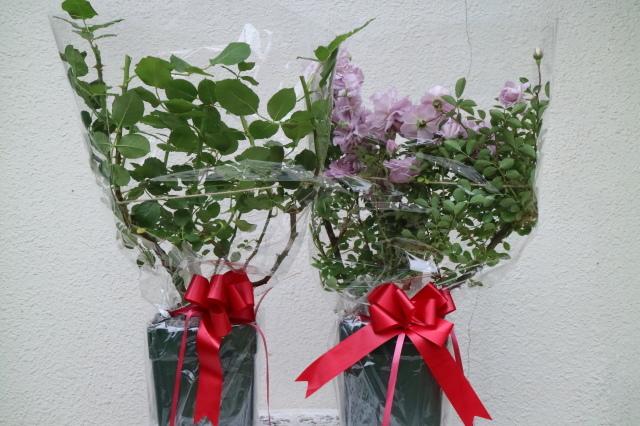 素敵に咲きました~リトル・マーメイド~♡ 今年の誕生日_e0397815_22415664.jpg