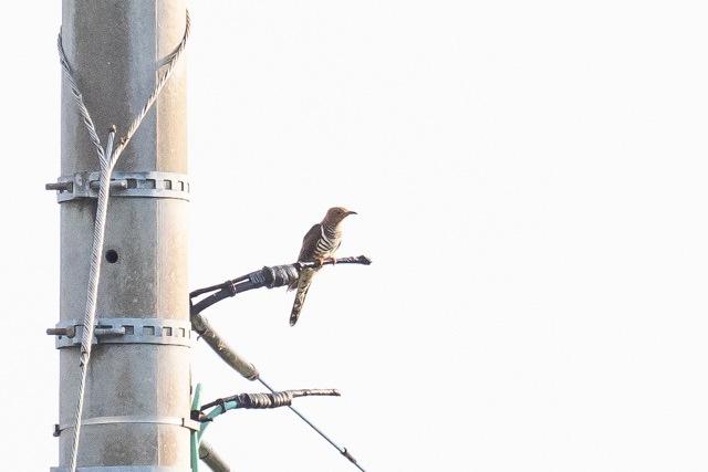5/20 今日の早朝鳥見は加志_a0080832_13205741.jpg