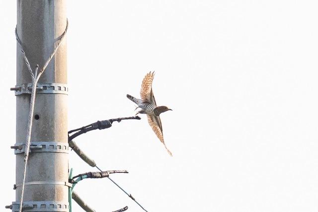 5/20 今日の早朝鳥見は加志_a0080832_13210125.jpg