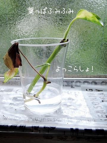雨もまた_c0062832_15431188.jpg