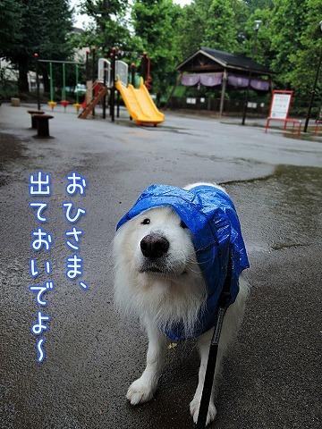 雨もまた_c0062832_16273027.jpg