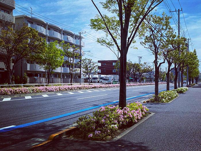 江戸川区南葛西 / iPhone 11_c0334533_19030859.jpg