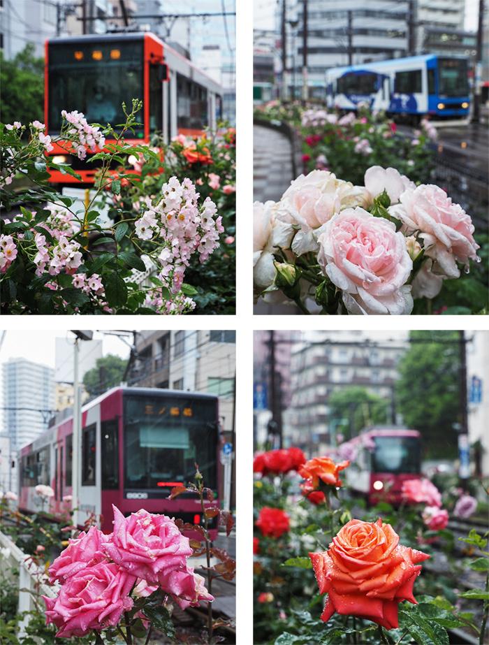 大塚のバラと最中_a0003650_10301825.jpg