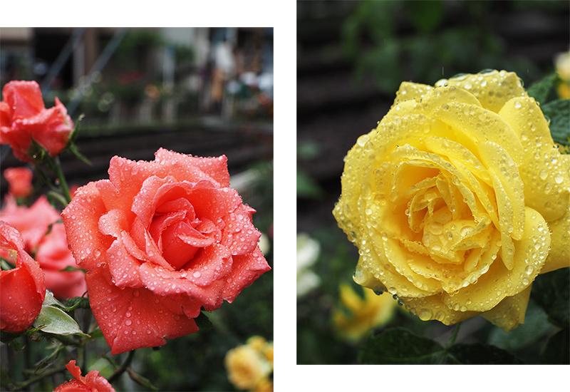 大塚のバラと最中_a0003650_10494085.jpg