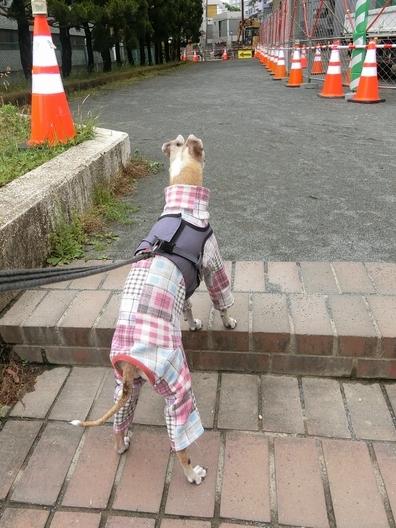 ルビよ、散歩は奥が深いよね。_b0234654_19243302.jpg
