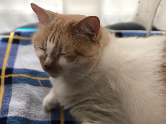 カイヌシの心猫には意味なし_d0085254_18383269.jpg