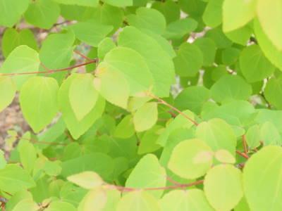 圧倒される緑色_a0129867_13455452.jpg