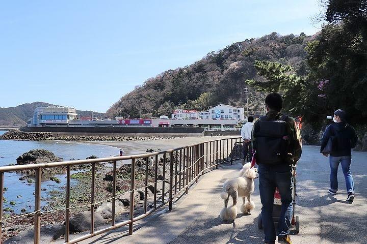二見浦輿玉神社と夫婦岩【誕生日旅行2】_b0111376_15141809.jpg
