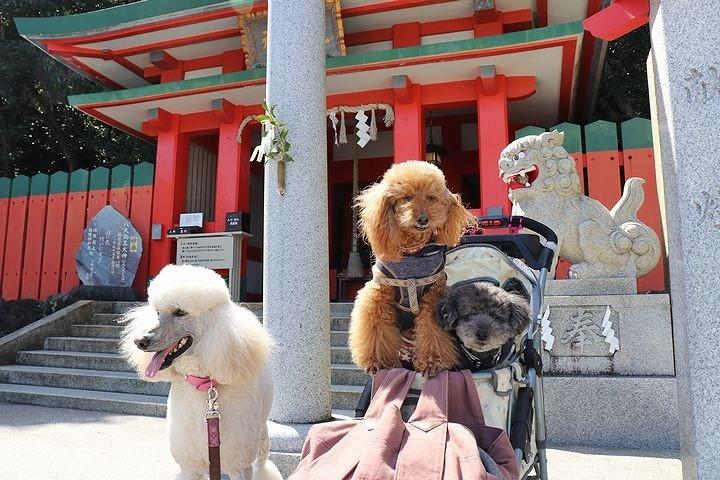 二見浦輿玉神社と夫婦岩【誕生日旅行2】_b0111376_15213108.jpg