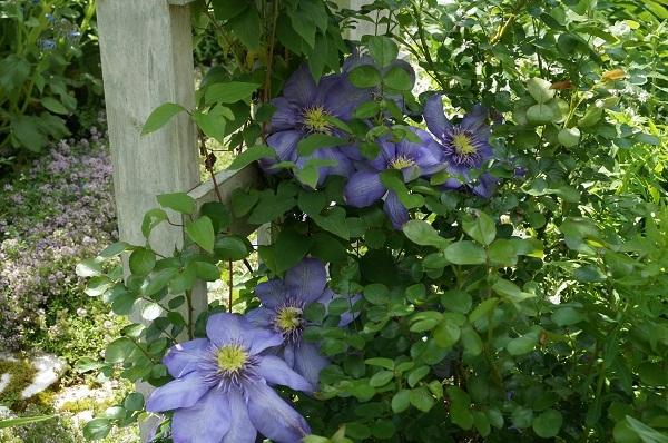 たいしたお花じゃありませんが、_e0365880_21250343.jpg