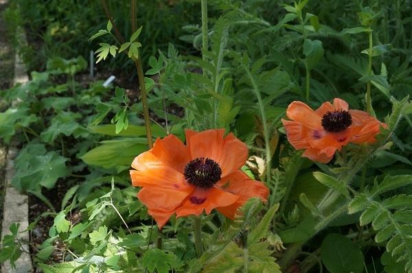 たいしたお花じゃありませんが、_e0365880_21265974.jpg