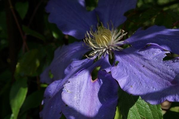 たいしたお花じゃありませんが、_e0365880_21275206.jpg