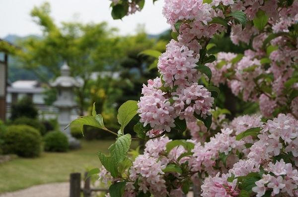 たいしたお花じゃありませんが、_e0365880_21434721.jpg