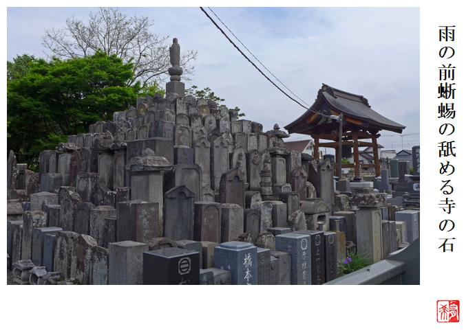 雨の前蜥蜴の舐める寺の石_a0248481_21051939.jpg