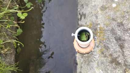 カエルが緑色になりました。そして、細い穴に隠れて寝ている。_b0126182_22484368.jpg