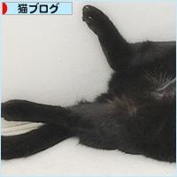 猫との交渉_a0389088_04472816.jpg