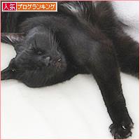 猫との交渉_a0389088_04472850.jpg