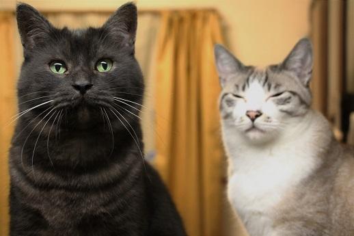 イケメン猫のゆるい日常_a0333195_22265389.jpg