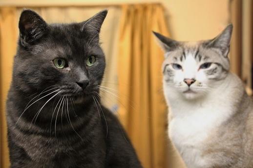 イケメン猫のゆるい日常_a0333195_22271435.jpg
