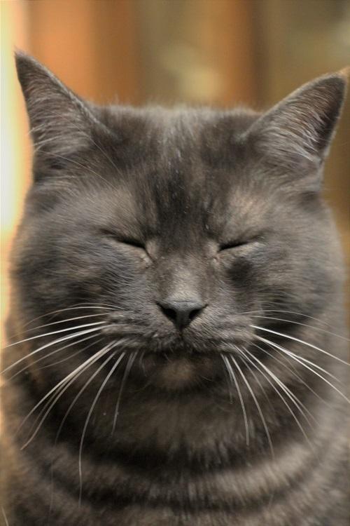 イケメン猫のゆるい日常_a0333195_22301043.jpg