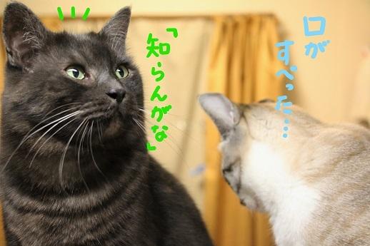 イケメン猫のゆるい日常_a0333195_22425919.jpg
