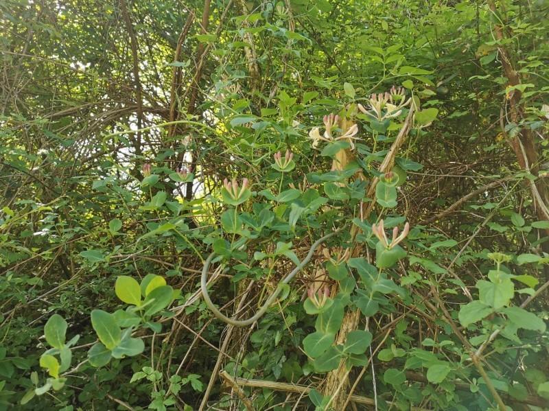 花に溢れるトスカーナの5月_f0106597_05451609.jpg