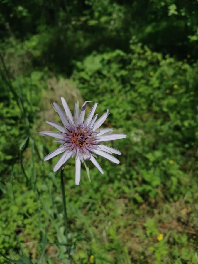 花に溢れるトスカーナの5月_f0106597_05585723.jpeg