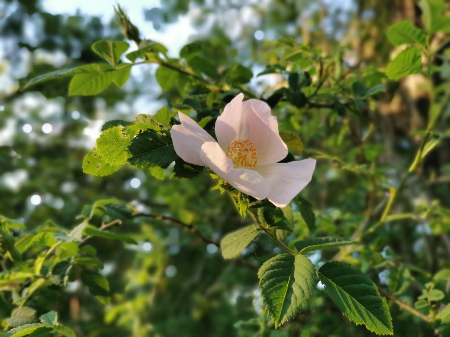 花に溢れるトスカーナの5月_f0106597_05593715.jpg