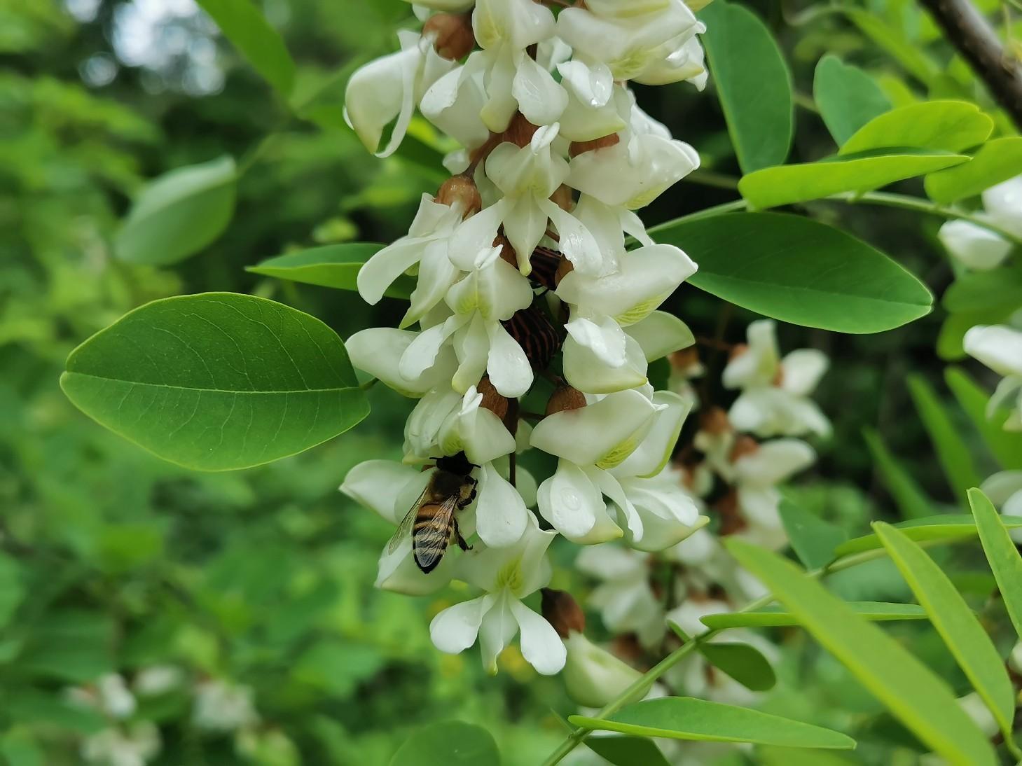 花に溢れるトスカーナの5月_f0106597_06002108.jpg