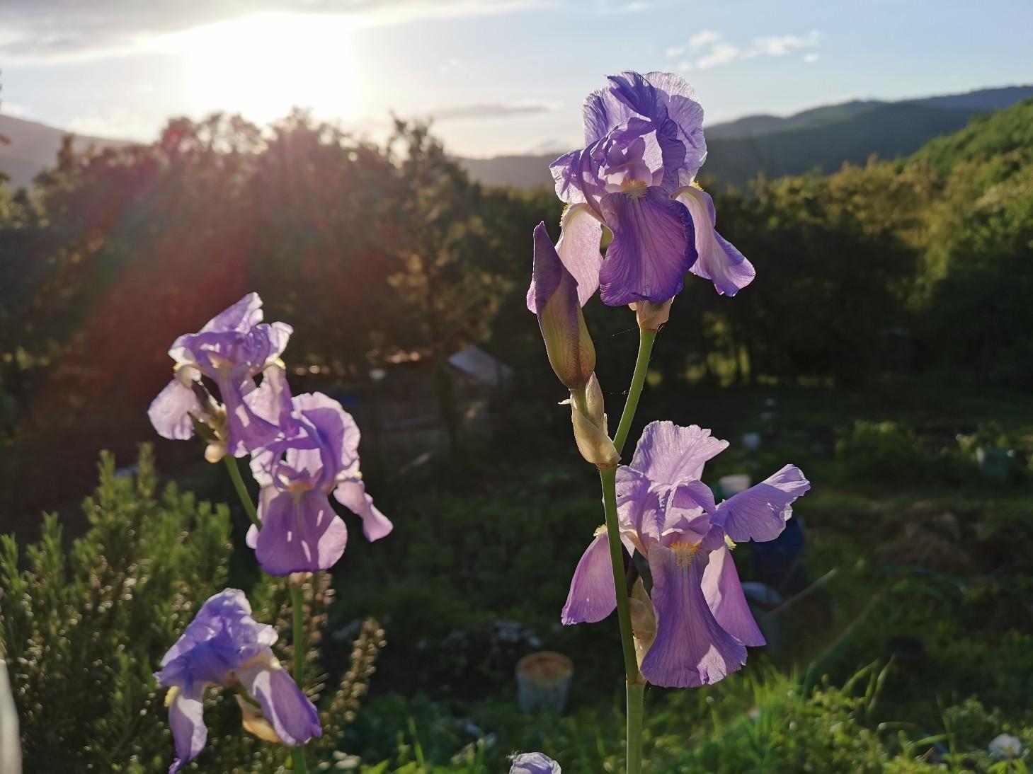 花に溢れるトスカーナの5月_f0106597_06091042.jpg