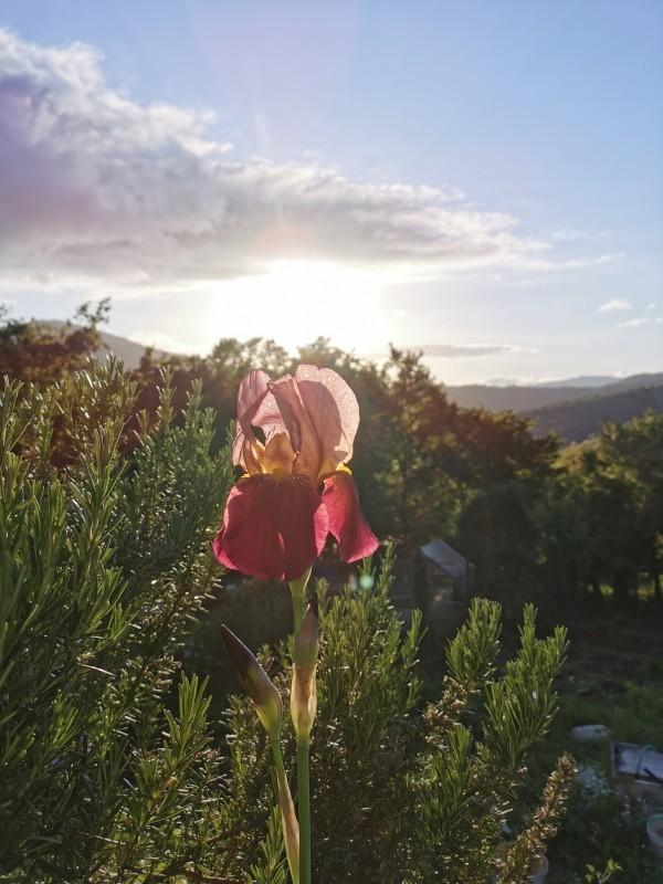 花に溢れるトスカーナの5月_f0106597_06133028.jpg