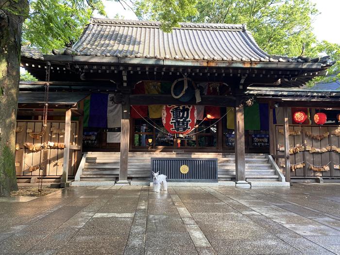 緑雨散歩_e0277800_17290645.jpg