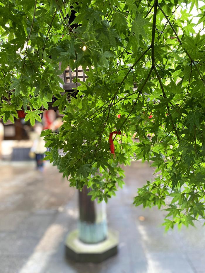 緑雨散歩_e0277800_17291571.jpg