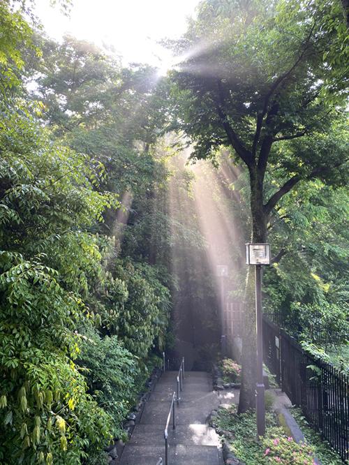 緑雨散歩_e0277800_17312460.jpg