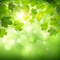 ALOHAな光が届きますように!_e0115301_23432797.jpeg