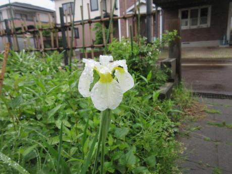 雨の庭畑_a0203003_08410302.jpg