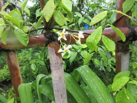 雨の庭畑_a0203003_08421158.jpg