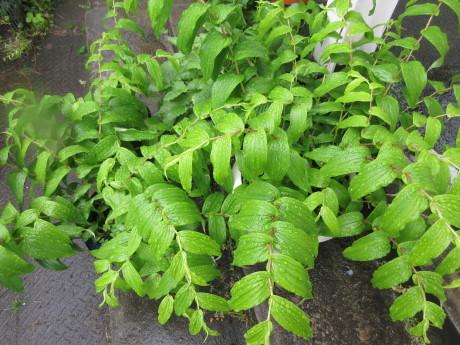 雨の庭畑_a0203003_08422829.jpg