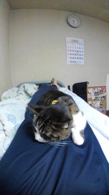 【猫】元気に??_f0141609_12053918.jpg