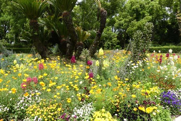 植物園再開 芍薬など花・花・花_e0048413_18083934.jpg