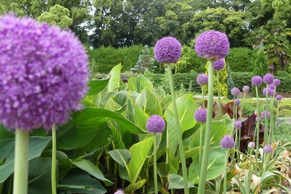 植物園再開 芍薬など花・花・花_e0048413_18084528.jpg