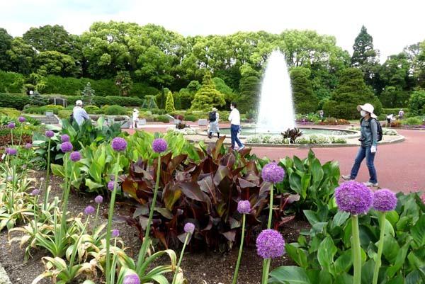 植物園再開 芍薬など花・花・花_e0048413_18085438.jpg